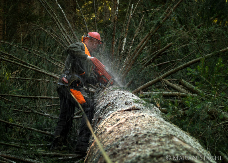 Waldarbeit in Oberösterreich